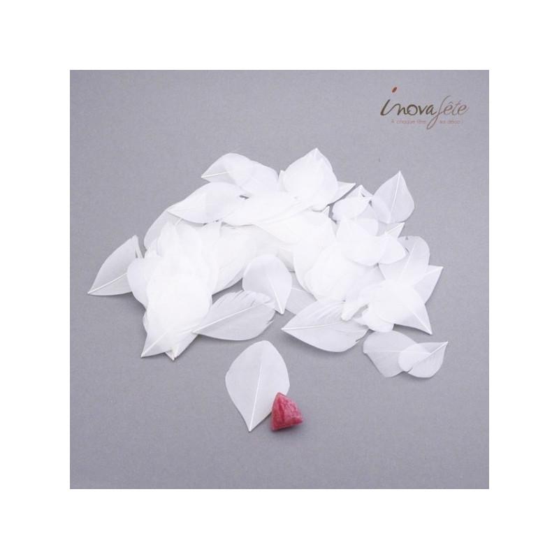 Plume plate blanche - Label Fête