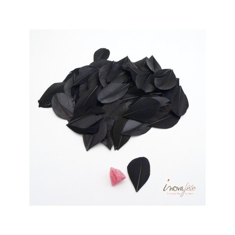 Plume plate noire - Label Fête
