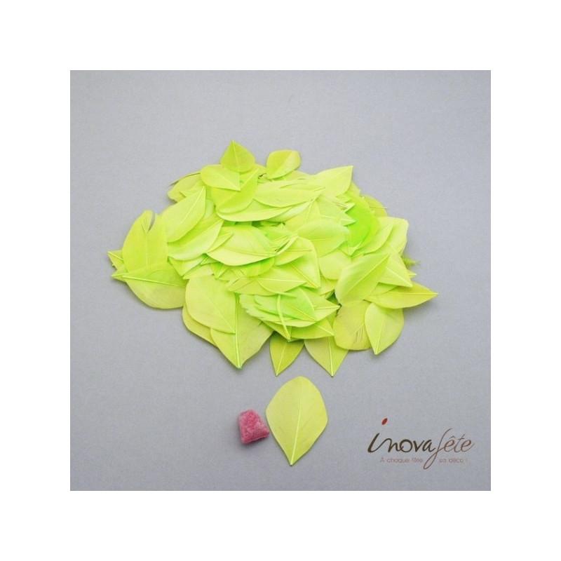 Plume plate vert anis - Label Fête