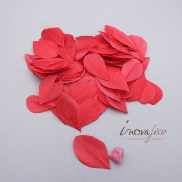 Plume plate rouge - Label Fête