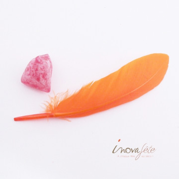 Plumes oranges /92 - Label Fête
