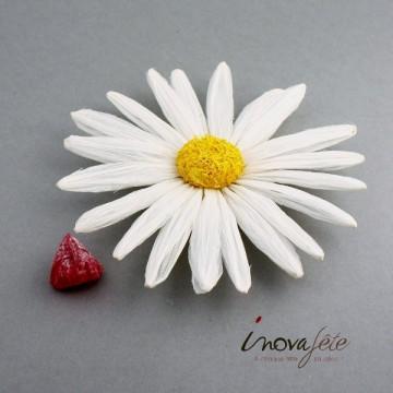 Marguerite blanche cœur jaune, pour une belle décoration de table